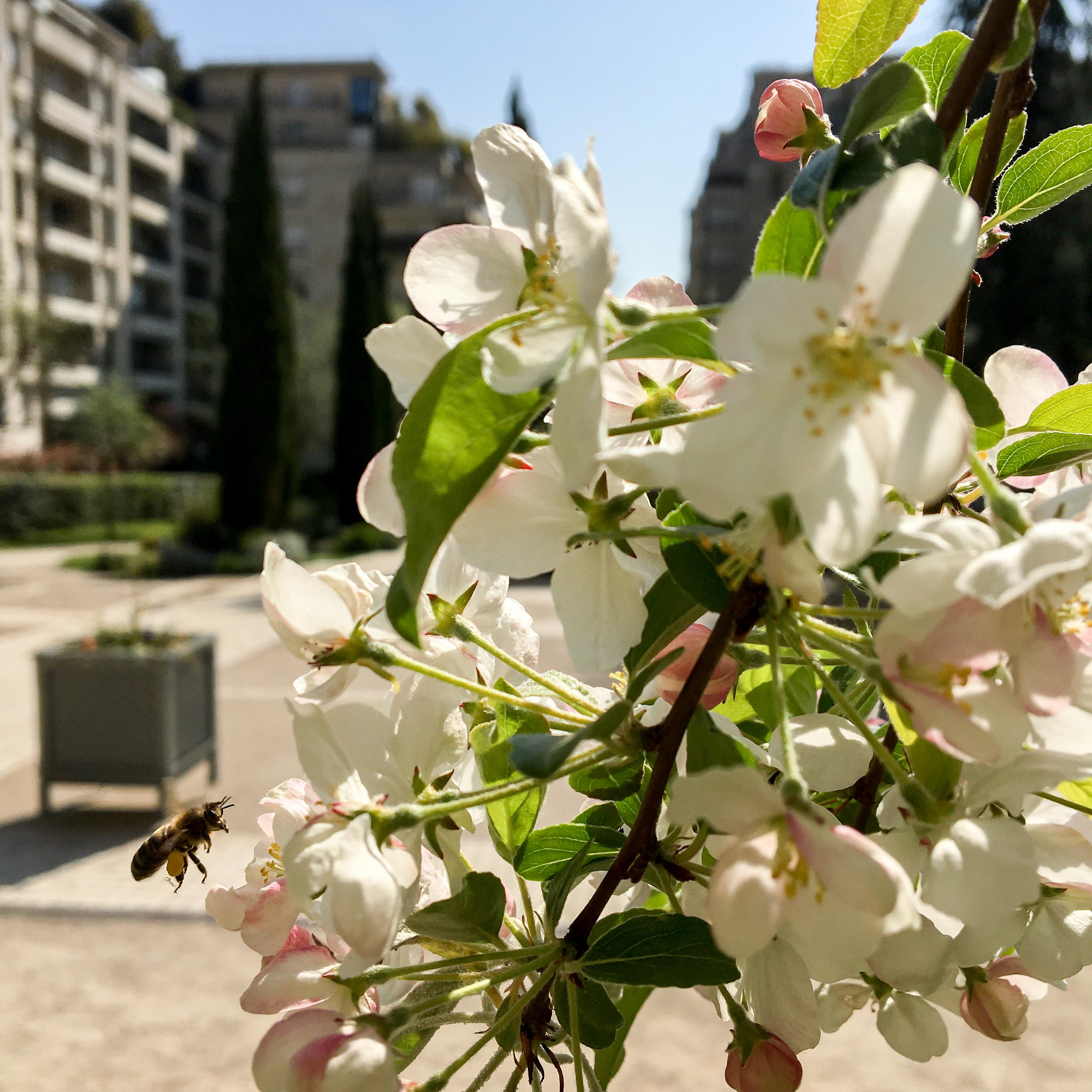 꽃과 벌_집 앞 공원에서-1.jpg